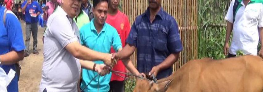Penyerahan Hewan Ternak Sapi Dihibahkan Kepada Petani dan Perkebunan di Desa Mangkarap